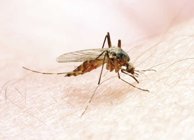 More effective malaria vaccine in the offing