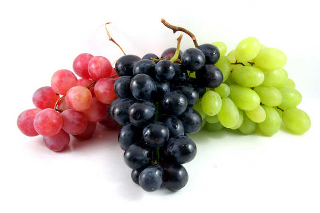Grape compounds may help fight colon cancer